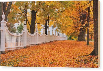 An Autumn Stroll - West Bennington Vermont Wood Print by Thomas Schoeller