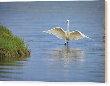 An Egret Spreads Its Wings Wood Print by Rick Berk