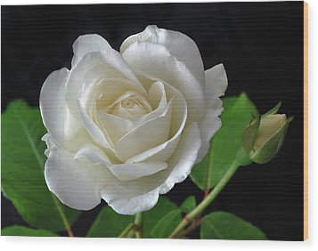 An English Rose Wood Print by Terence Davis