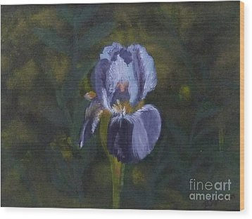 An Iris In My Garden Wood Print