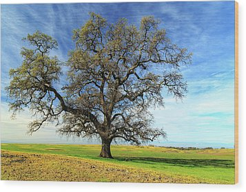 Wood Print featuring the photograph An Oak In Spring by James Eddy