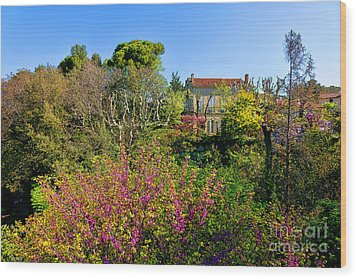 An Old House In Provence Wood Print by Olivier Le Queinec