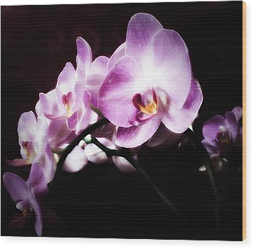 An Orchid For You Wood Print by Gabriella Weninger - David