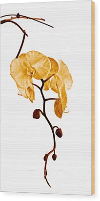 An Orchid's Perfume Wood Print by Gwyn Newcombe
