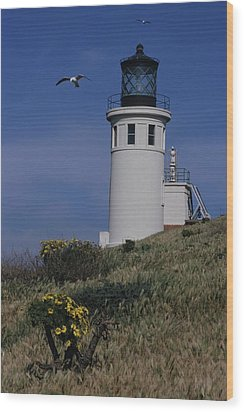 Anacapa Lighthouse And Western Gulls Wood Print by Don Kreuter
