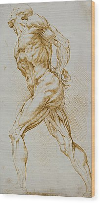 Anatomical Study Wood Print by Rubens