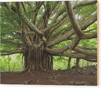 Ancient Banyan Beauty Wood Print by Phil Stone