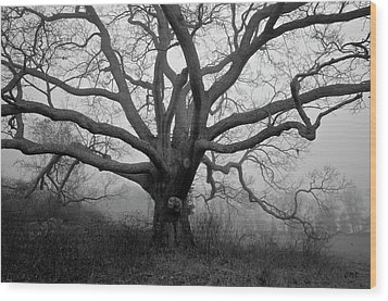 Ancient Oak Tree V - Sheep Pasture Wood Print
