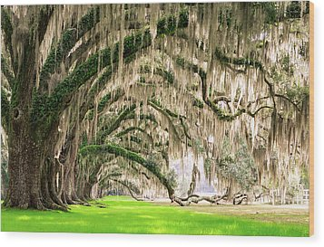 Ancient Southern Oaks Wood Print