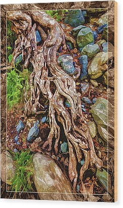Ancient Sycamore Roots Wood Print by ABeautifulSky Photography