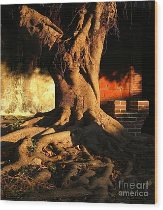 Ancient Tree In A Chinese Courtyard Wood Print by Yali Shi