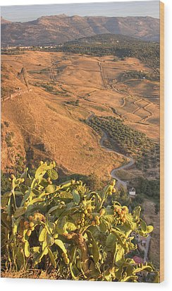 Wood Print featuring the photograph Andalucian Golden Valley by Ian Middleton