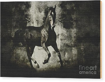 Andalusian Horse Wood Print