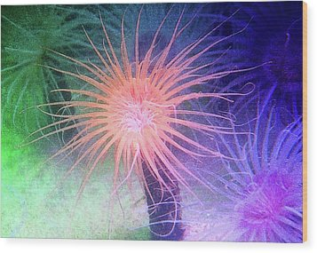 Wood Print featuring the photograph Anemone Color by Anthony Jones