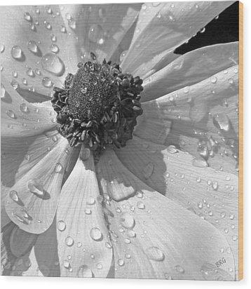 Anemone Poppy In Black And White Wood Print by Ben and Raisa Gertsberg