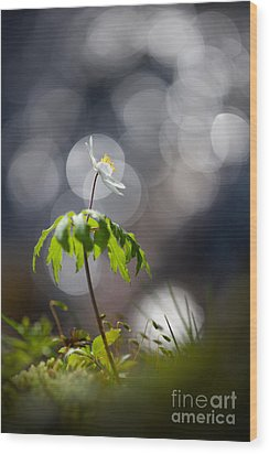 Anemone  Wood Print by Rikard Strand