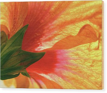 Wood Print featuring the photograph Angel Brushstrokes  by Marie Hicks