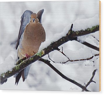 Wood Print featuring the photograph Angel Mourning Dove by Angel Cher