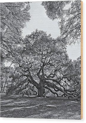Angel Oak Wood Print by Dave Stegmeir