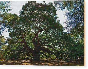 Angel Oak Tree 2004 Wood Print by Louis Dallara