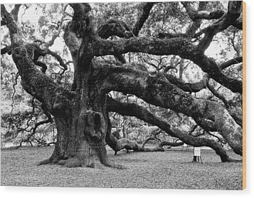 Angel Oak Tree 2009 Black And White Wood Print by Louis Dallara