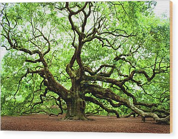 Angel Oak Tree Wood Print by Jean Haynes