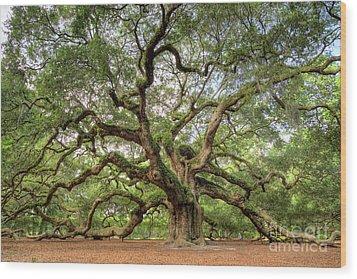 Angel Oak Tree Of Life Wood Print by Dustin K Ryan