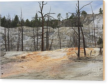 Angel Terrace At Mammoth Hot Springs Yellowstone National Park Wood Print by Louise Heusinkveld