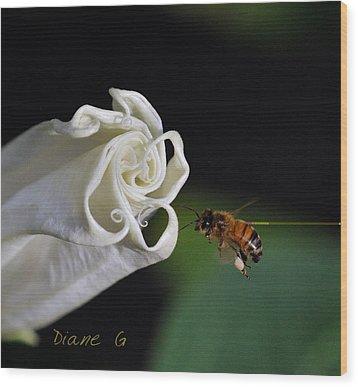 Angel Trumpet Wood Print