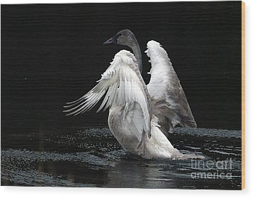 Angel Wings 2 Wood Print by Sharon Talson
