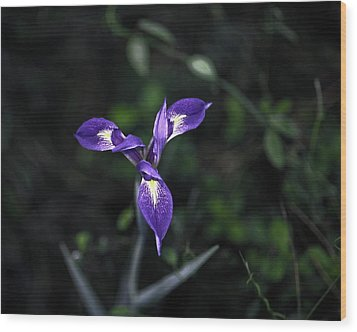 Wood Print featuring the photograph Angelpod Blue Flag by Sally Weigand