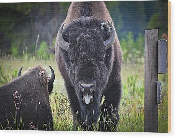 Angry Bison Wood Print by Greg Norrell