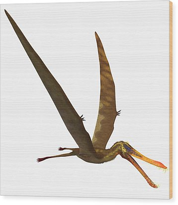 Anhanguera Pterosaur Wood Print by Corey Ford