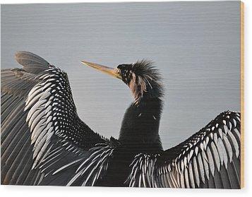 Anhinga Anhinga Portrait - Water Turkey Wood Print