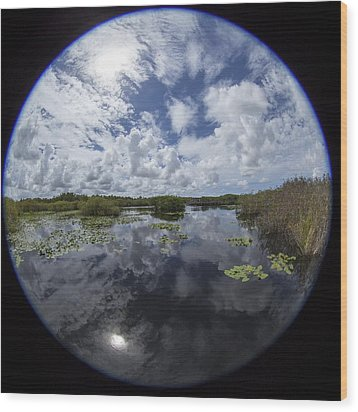 Anhinga Trail 86 Wood Print