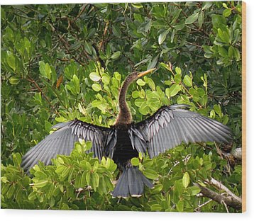 Wood Print featuring the photograph Anhinga With Silver Wings by Rosalie Scanlon