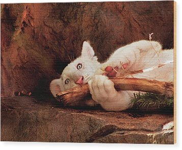 Animal - Cat - My Chew Toy Wood Print by Mike Savad