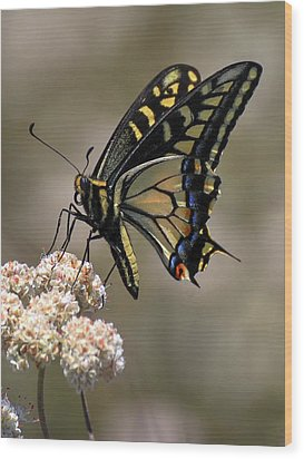 Anise Swallowtail Wood Print