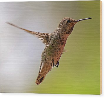 Wood Print featuring the photograph Anna's Hummingbird H24 by Mark Myhaver