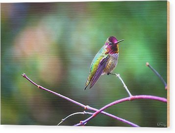 Anna's Hummingbird II Wood Print