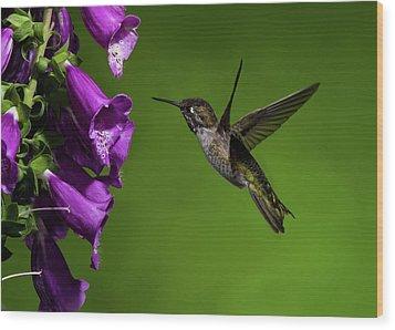 Wood Print featuring the photograph Anna's Hummingbird With Fox Glove Flowers by Lara Ellis