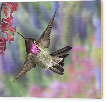Annas Pastel Background Wood Print by Gregory Scott