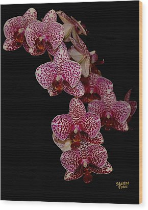 Anniversary Orchid Plant On Black Wood Print