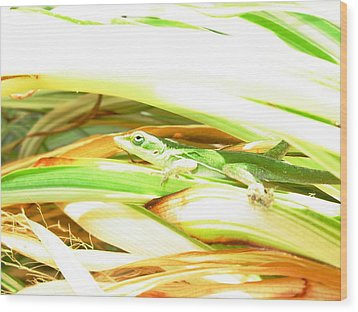 Wood Print featuring the photograph Anole Sunning by Jeanne Kay Juhos
