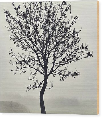 Another Walk Through The Wood Print by John Edwards