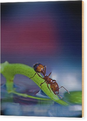 Ant In A Colorful World Wood Print by Bob Rasulev