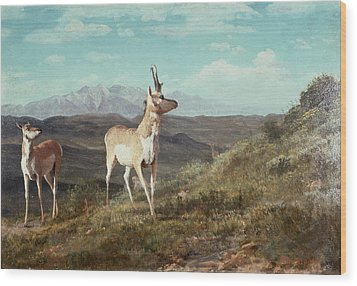 Antelope Wood Print by Albert Bierstadt