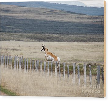 Wood Print featuring the photograph Antelope Jumping Fence 1 by Rebecca Margraf
