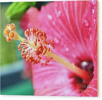 Anthers And Flaments On Hibiscus Wood Print by Eva Thomas