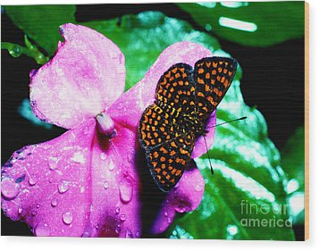 Antillean Crescent Butterfly On Impatiens Wood Print by Thomas R Fletcher